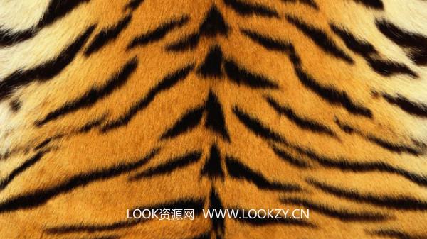材质贴图-高清分辨率动物纹理贴图素材合集 免费下载