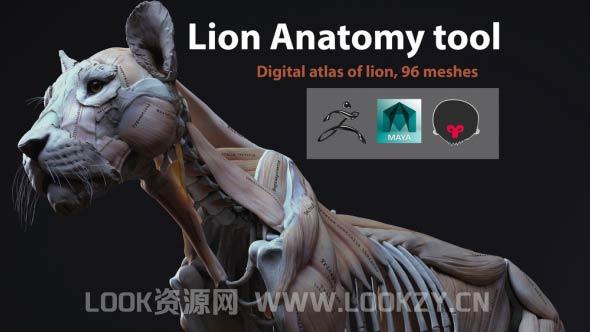 3D模型-狮子肌肉解剖3D模型 (格式支持FBX/ZTL/MA/SPP)