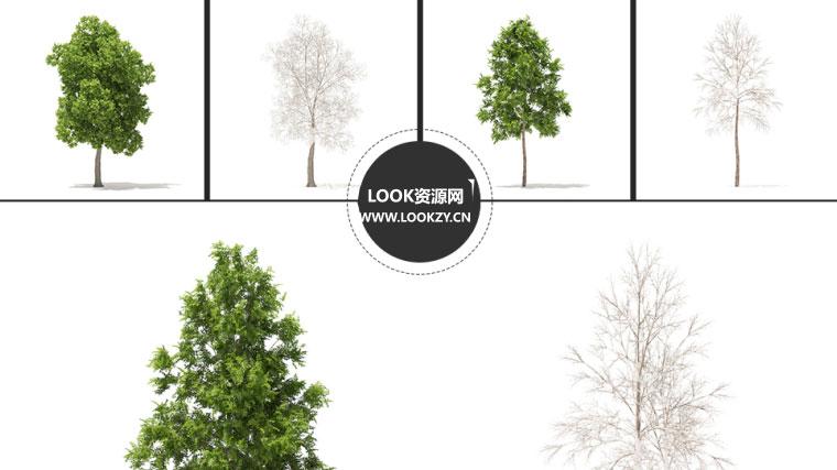 C4D模型-54棵树木3D模型合集包含材质贴图