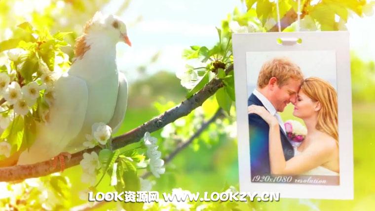 AE模板-婚礼照片画廊飞舞悬挂相册婚礼片头AE模板 Wedding Opener