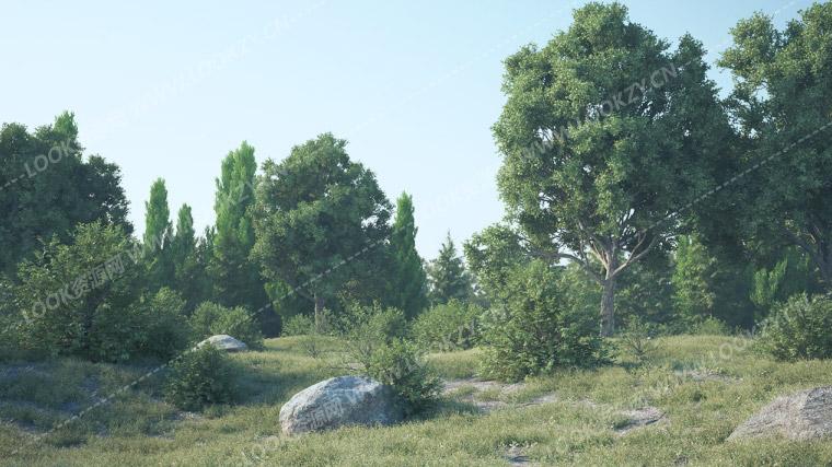 C4D插件-中文汉化版C4D植物树木快速生成动画插件 Forester WIN