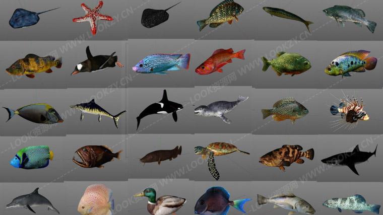 C4D模型-40个海洋生物动物鱼类C4D模型含绑定动画工程