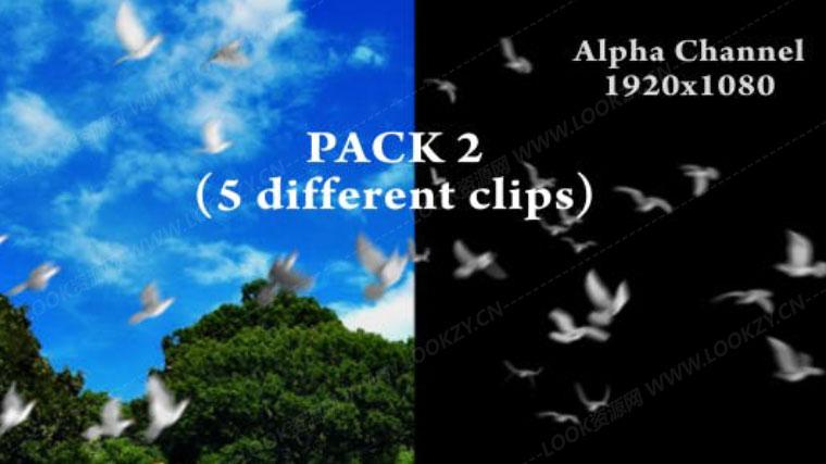 视频素材-鸽子飞翔通道视频素材下载 Flying Doves Pack Vol.2