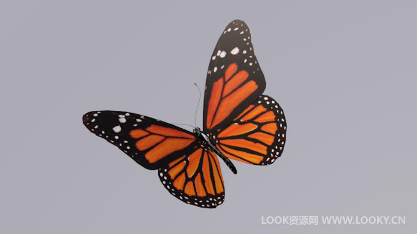 C4D模型-C4D蝴蝶模型含绑定动画下载